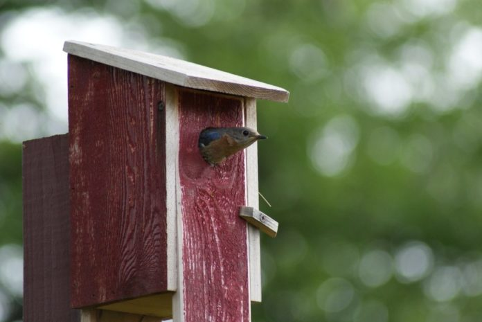 Help a bird build a birdhouse