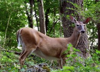 CWD Causes Baiting/Feeding Bans