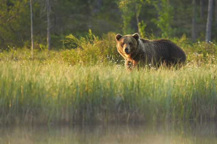 Hunters and hikers urged to be 'Bear Aware' as they head into the field this spring | Outdoor Newspaper