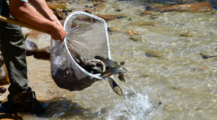Fish stocking continues statewide across Idaho, and here are some highlights - Outdoor Newspaper