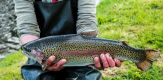 Top 9 Fall Iowa Trout Fishing Destinations | Outdoor Newspaper