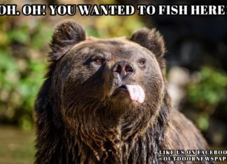 Fishing Meme Oh Oh You wanted to fish here Bear Meme | Outdoor Newspaper