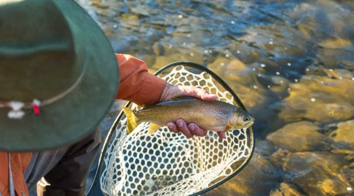 Illinois Fall Trout Season Opens | Outdoor Newspaper