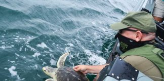 Natural Resources Police Escort Sea Turtles Back to the Wild - Photo by Lauren Moses | Outdoor Newspaper