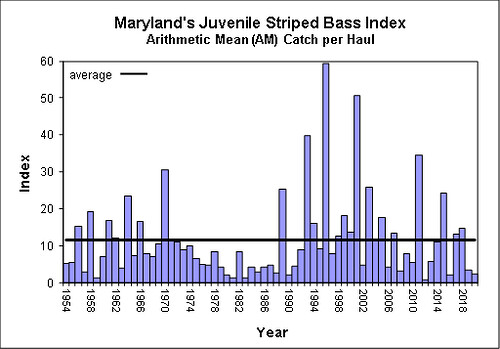 Chesapeake Bay Young-of-Year Survey Results