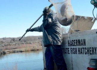 Koehn Farms Donate Surplus Rainbow Trout To Stock Snake River - Outdoor Newspaper