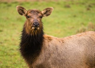 Michigan Men Arraigned in 2019 Pigeon River Country Elk Poaching Case