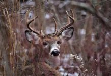 Kentucky Deer Hunting Season Yields a Top-five Harvest Total - Outdoor Newspaper