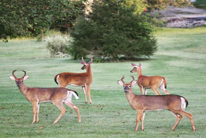 Turn Your Property Into The Perfect Habitat For Deer - Outdoor Newspaper