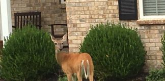 Colorado Attacked by Doe In Home - Outdoor Newspaper