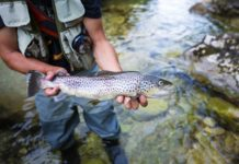 Fly Fishing For Brown Trout - Outdoor Newspaper