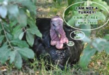 Turkey Hunting Meme - I am Not a Turkey - Outdoor Newspaper
